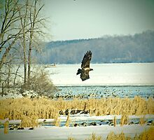 Eagle on the Hunt by Thomas Young