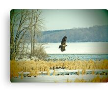Eagle on the Hunt Canvas Print