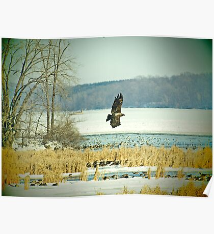 Eagle on the Hunt Poster