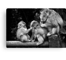 Three Monkeys Canvas Print