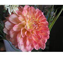 Pink flower (unedited) Photographic Print