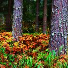 Autumn Forest III by SunDwn