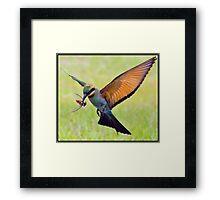 Rainbow Bee-Eater 458 Framed Print