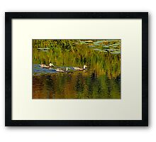 Autumn Feathers And Rippled Reflections Framed Print