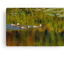 Autumn Feathers And Rippled Reflections Canvas Print