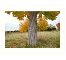 Spiral Tree Trunk with Colorful Fall Leaves Art Print