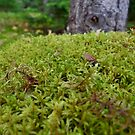 Magical Mossy Knoll by Nadine Staaf