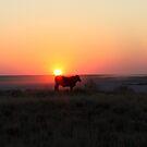 Cattle in a Makgadikadi Sunset by Donald  Mavor