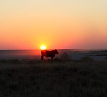 Cattle in a Makgadikadi Sunset by Donald  Mavor