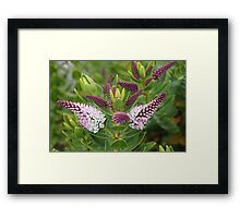 Teeny-Weeny Two-Toned Flowers Framed Print
