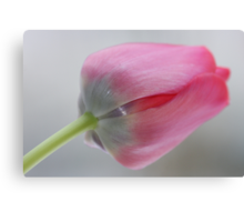 Carpe diem ! Ave ! Ave! I love tulips .  ###  Featured  by the in The Pink Group  ### ! Favorites: 6 Views: 357 .  Thx! Featured in Tulips. Canvas Print