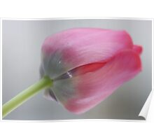 Carpe diem ! Ave ! Ave! I love tulips .  ###  Featured  by the in The Pink Group  ### ! Favorites: 6 Views: 357 .  Thx! Featured in Tulips. Poster