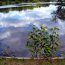 Leaves Against a Reflected Sky by Jane Neill-Hancock