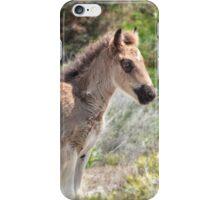 Shackleford foal iPhone Case/Skin