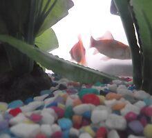 Photo project: Goldfish/(3 of 4) -(270112)- digital photo by paulramnora