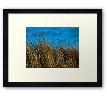 Dune grasses and sky Framed Print