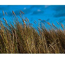 Dune grasses and sky Photographic Print