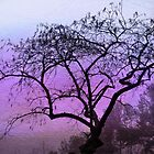 Winter Silhouette by JillsyGirl