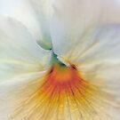 white pansy by alan shapiro