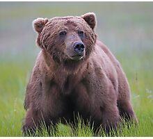 A Big Brown Bear!! Photographic Print