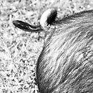 One little piggy by Robert Down