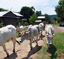 Kampong Speu  by nicholasderoose