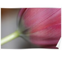 Soft & velvet tulip dream touch . Views: 358. Poster
