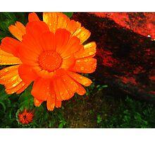 Orange and Red Photographic Print
