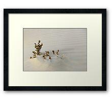 Monahans White Sand Hills ~ Desert Life Framed Print