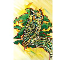 Perched Owl Photographic Print