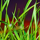 plant life by Metcalfe