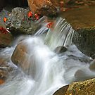 CASCADE,MIDDLE PRONG LITTLE RIVER by Chuck Wickham
