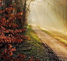 There is so much light on the path by jchanders