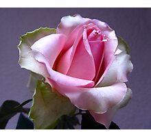 """Lavender With Pink Rose"" Photographic Print"