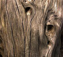 Kauri Wood from New Zealand by M. van Oostrum