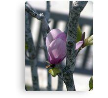 Deep pink magnolia flower. Canvas Print