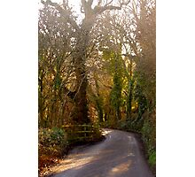 Country Lane, South Hams Photographic Print