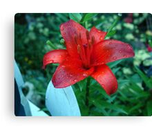 Beautiful vibrant red lily. Canvas Print