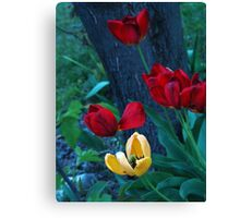 Vibrant red and yellow tulips. Canvas Print
