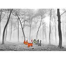 Two Cats Have Fun In The Winter Photographic Print