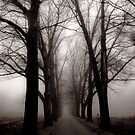 Dark Trees by Mary Ann Reilly