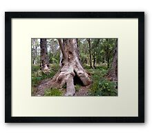 Valley of the Giants, Walpole WA Framed Print