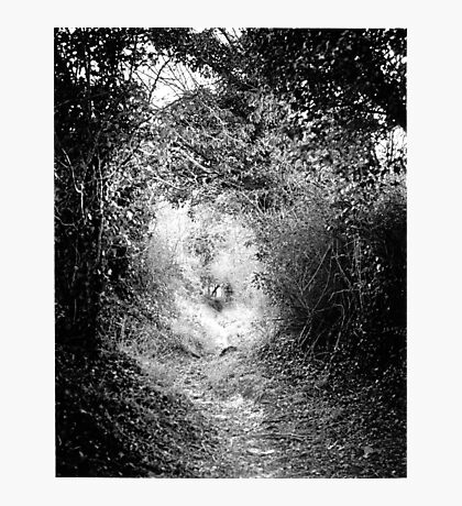 The Fairy Pathway (35mm) Photographic Print