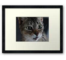 Transfixed Abyssinian  Framed Print
