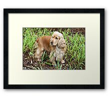 The Rains Are Here: Gemini in Wet Grass Framed Print