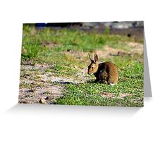 North Head Manly - Rabbit Greeting Card