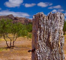 The weathered post by Phillip Haley