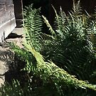 Fern and old Swedish Woodhouse by HeklaHekla