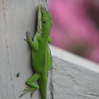 Native Green Anole to TN by JeffeeArt4u