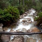 Eurobin Creek. Mt Buffalo National Park. by John Sharp